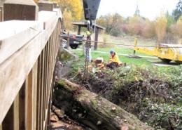 Log Removal 2